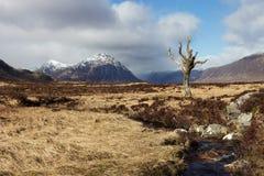 Toter Baum - Schottland Lizenzfreie Stockbilder