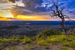 Toter Baum am Sonnenuntergang Stockbild
