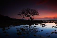 Toter Baum am Sonnenuntergangstrand Stockfotos
