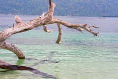 Toter Baum an Strand Thailand Adang Rawee Stockbilder