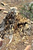 Toter Baum-Stumpf am Holz-Canyon See, Coconino County, Arizona, Vereinigte Staaten lizenzfreie stockbilder