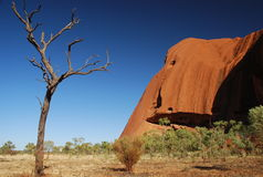Toter Baum an Uluru/an Ayers-Felsen Stockfotos