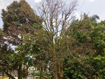 Toter Baum um Livebaum lizenzfreie stockbilder
