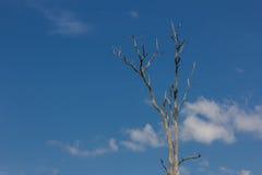 Toter Baum und Himmel Stockfoto
