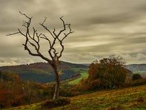 Toter Baum in Unheil verkündendem Himmel Lizenzfreie Stockfotos
