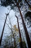 Toter Baumastaufstieg im Himmel Stockbild