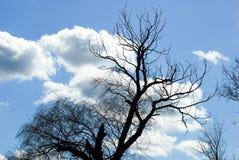 Toter blauer Himmel des Weidenbaums bewölkt den Windschlag lizenzfreie stockfotografie