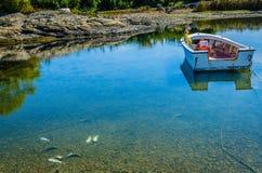Toter Fisch-Hummer-Blockierabfall Lizenzfreie Stockbilder
