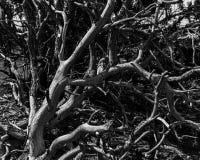 Toter gebrannter Baum auf der roten Schluchtkante stockbild