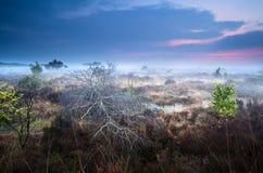 Toter gefallener Baum auf Sumpf im nebelhaften Sonnenuntergang Lizenzfreie Stockfotos