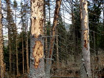 Toter gezierter Wald Stockfotos