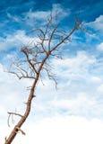 Toter und trockener Baum Stockfotografie