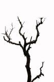 Toter und trockener Baum wird auf weißem backround lokalisiert Stockbild