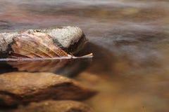 Toter Urlaub des Stilllebens, der in Flusswasser mit Felsen schwimmt Stockfotos