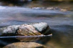 Toter Urlaub des Stilllebens, der in Flusswasser mit Felsen schwimmt Lizenzfreie Stockbilder