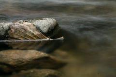 Toter Urlaub des Stilllebens, der in Flusswasser mit Felsen schwimmt Lizenzfreie Stockfotos