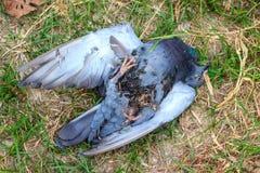 Toter Vogel Lizenzfreies Stockbild