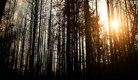 Toter Wald Lizenzfreies Stockbild