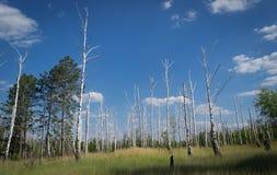 Toter Wald Stockfotos