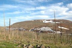 Toter Wald in der Tundra Nord-Sibirien Lizenzfreie Stockfotos