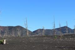 Toter Wald, Tolbachik-Vulkan Stockbild