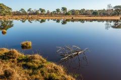Toter Zweig tadellos reflektiert im Spiegel-glatten Wasser Lizenzfreie Stockfotos