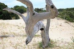 Totes Baum-Kabel Lizenzfreie Stockbilder