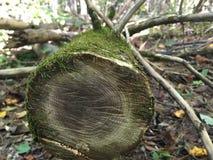 Totes Baum-Kabel Lizenzfreie Stockfotografie
