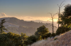 Totes Baum-Schattenbild am Sonnenuntergang Stockfotografie
