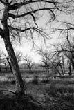 Totes Baumlandschaftb&w lizenzfreies stockbild