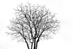 Totes Baummuster auf Weiß Stockfotografie