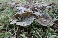 Totes gefallenes Blatt über dem Gras an einem einfrierenden Wintermorgen Stockbild