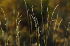 Totes Gras Stockfoto