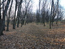 Totes Grove, kahler Berg, Wald, Kiew, Halloween Lizenzfreie Stockbilder