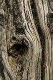 Totes Holz lizenzfreie stockfotografie