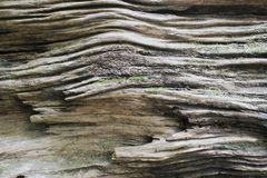 Totes Holz Stockbild