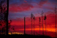 Totes Holz auf einem Sonnenunterganghintergrund Stockbild