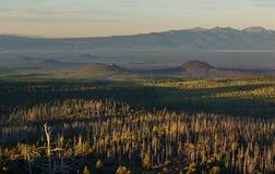 Totes Holz - eine Konsequenz einer katastrophalen Freisetzung von Asche während der Eruption des Vulkans im Jahre 1975 Tolbachik  Lizenzfreies Stockfoto