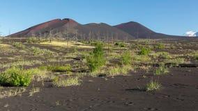 Totes Holz - Konsequenz der katastrophalen Freisetzung von Asche während der Eruption Vulkan im Jahre 1975 Norddurchbruches Tolba stock video footage
