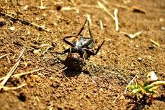 Totes Insekt, das in der Sonne auf seiner Rückseite sich aalt Stockfoto