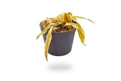 Totes Pflanzen Lizenzfreies Stockfoto