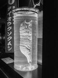 Totes riesiges isopod im Glasrohr Stockbild