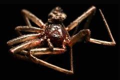 Totes Spinnenmakro lokalisiert Stockbild