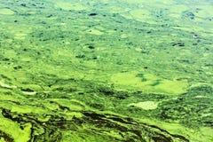Totes Wasser mit den gelben und grünen Abschaumstreifen mit Verschmutzung Stockbilder