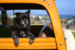 Toto non in Kansas più Fotografie Stock