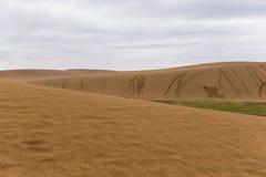 Tottori sanddyn i Japan royaltyfri bild