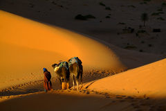 Touareg and camels Stock Images