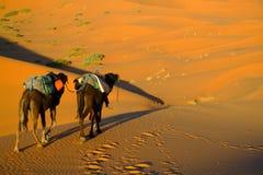 Touareg e cammelli Immagine Stock