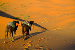 Touareg en kamelen stock afbeelding