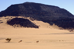 Touareg nomads crossing a vast desert. Landscape with their camels, Acacus Mountains, Sahara desert, Libya Stock Photography